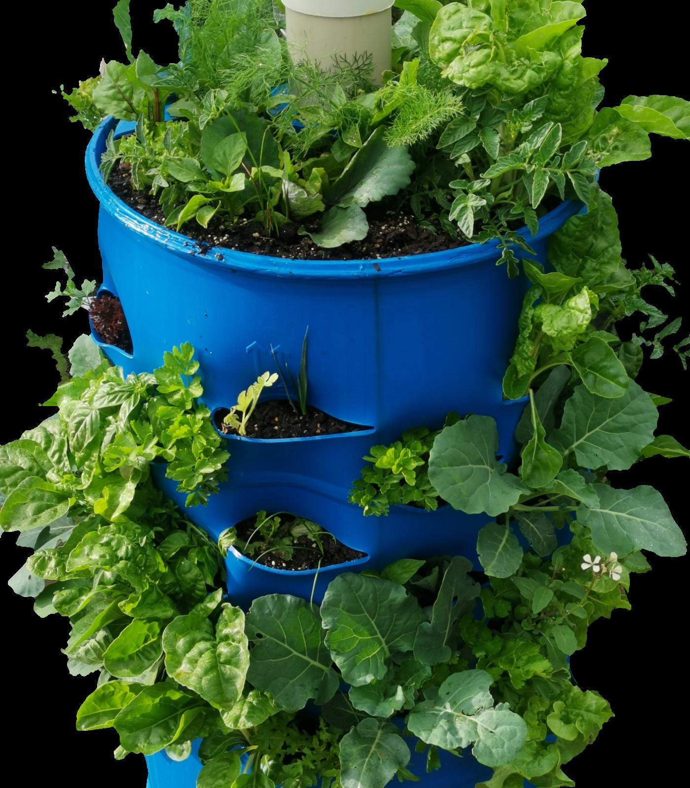 Barrel for home Garden